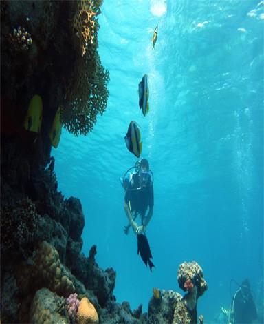 Diving